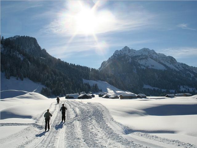 sibra_winter_11